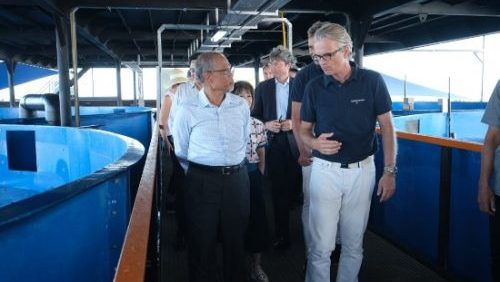 First Aquaculture 4.0 Closed Containment System For Tropical Fish Launched In Singapore